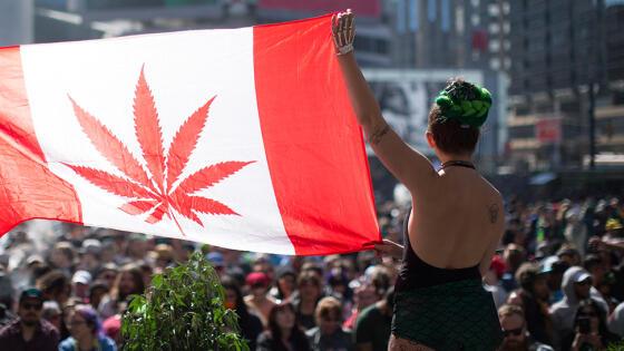 Kanada legalizuje marihuanę. Rynek wart miliardy dolarów