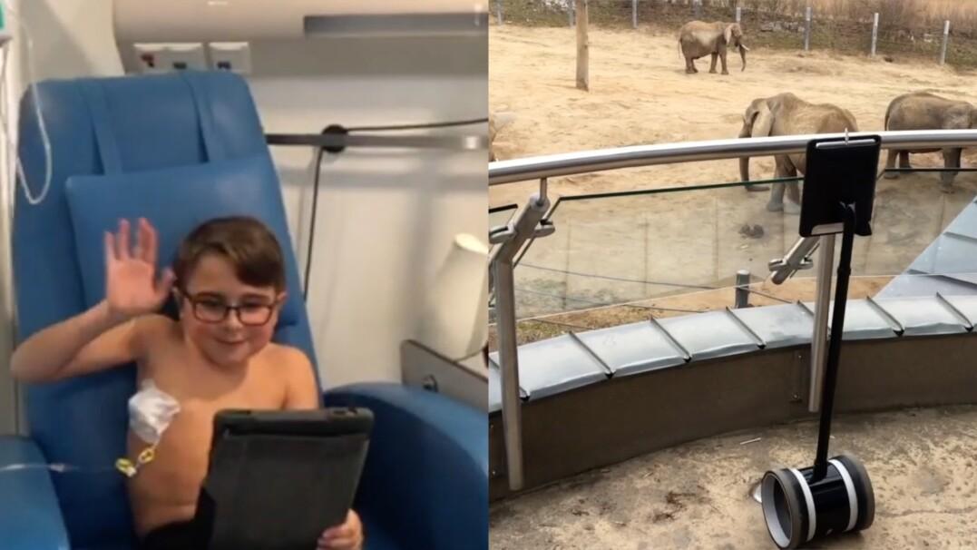 Robot, który pozwala dzieciom zwiedzać zoo podczas pobytu w szpitalu