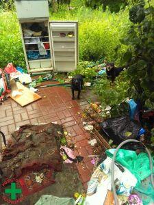 Gołębie, psy, króliki. Ponad 500 zwierząt trzymał w fatalnych warunkach