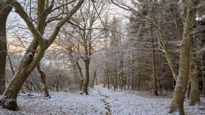 Pogoda na jutro: nocą do -6 stopni, w dzień lokalnie popada śnieg