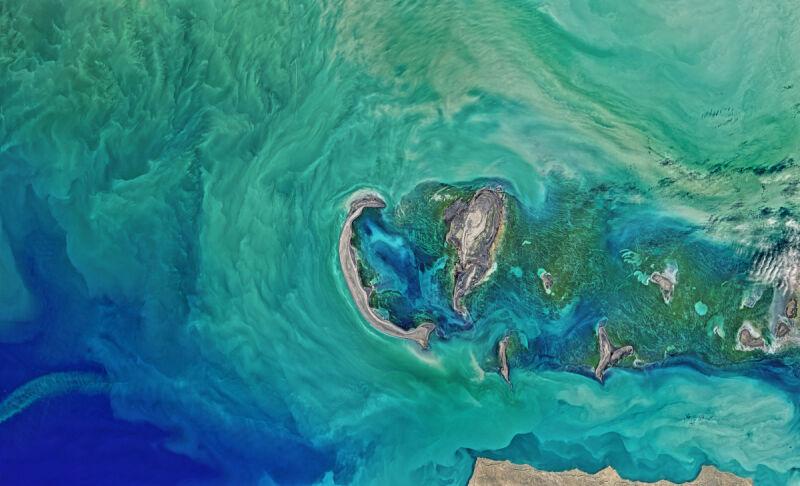 Roślinność na Morzu Kaspijskim (zdjęcie z 16 kwietnia 2016 roku)
