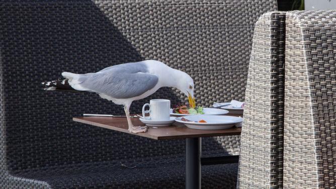 Dlaczego mewa ukradła ci frytkę? Bo jej dotknąłeś